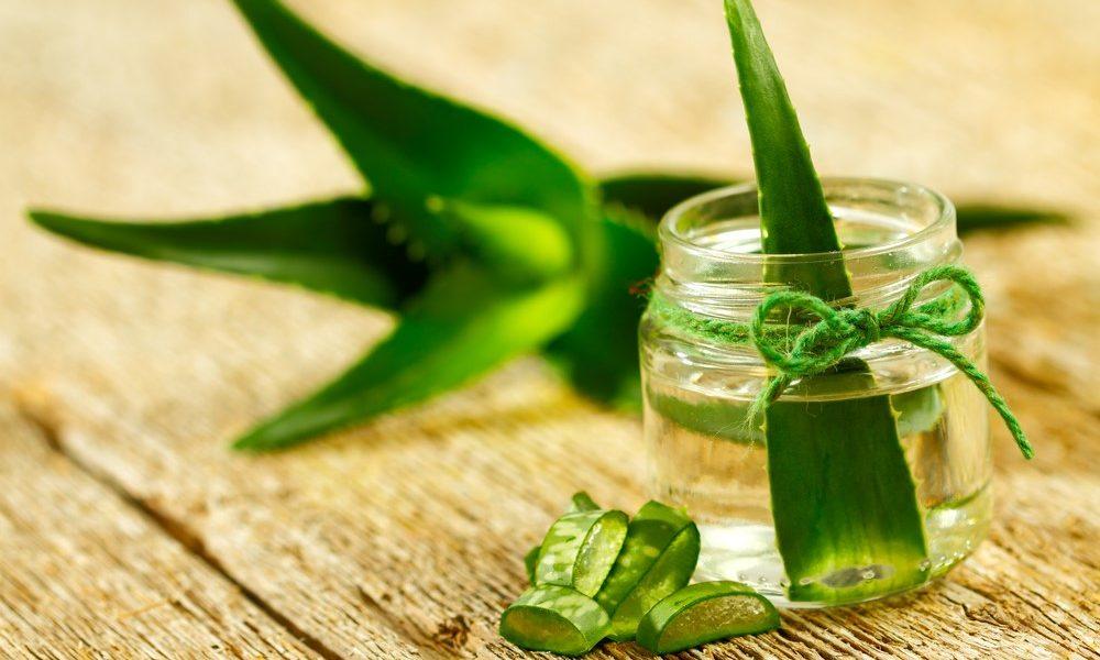 Aloe, Bardana, Borragine e Calendula...Le Piante Alleate per Prevenire i Danni del Sole..